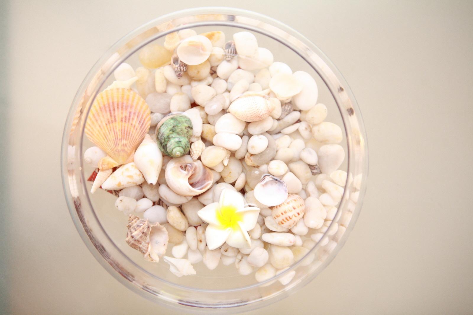 貝 プルメリア